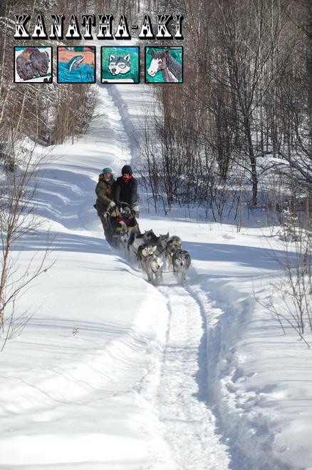 randonnée en chien de traineau dans les Laurentides