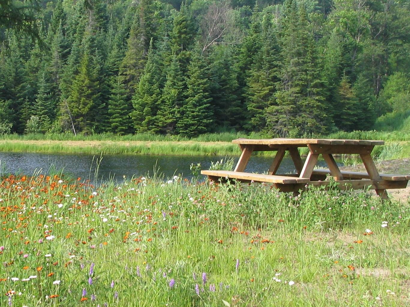 Picnic au bord étang