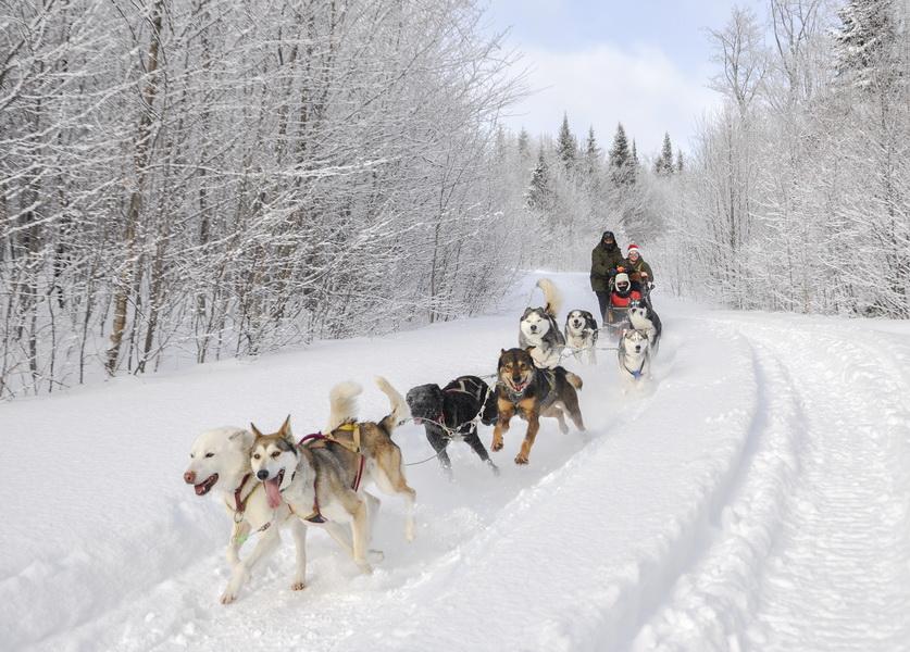 Traineau à chiens pour tous