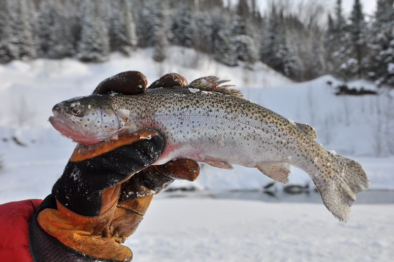 Pêche dans un trou sur la glace