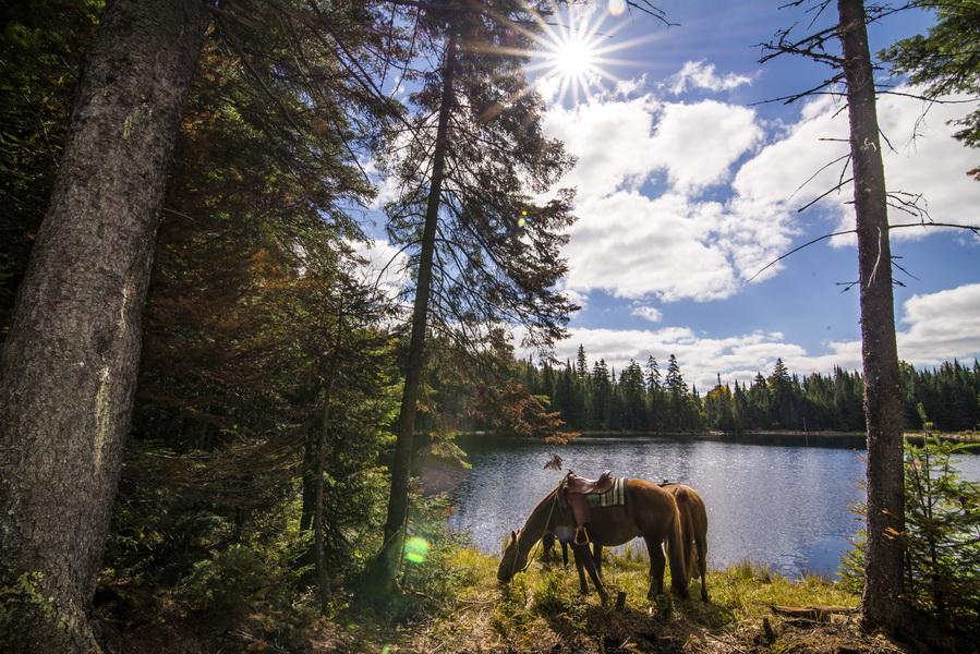 Coucher de soleil � cheval