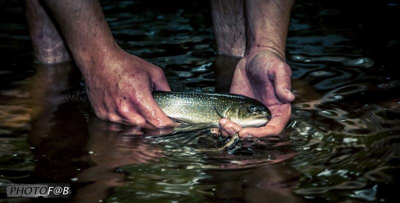 pêche à la main