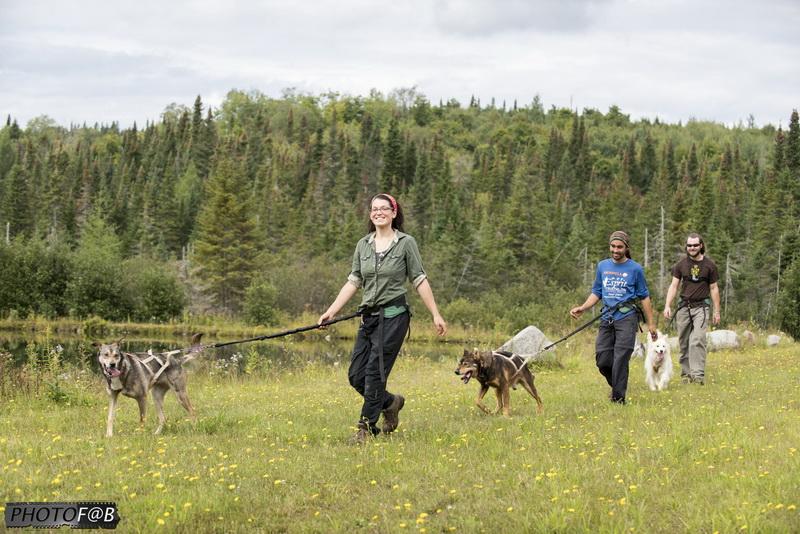 Marche en forêt avec nos chiens de traineau
