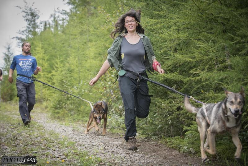 Randonnée avec les chiens de traineau