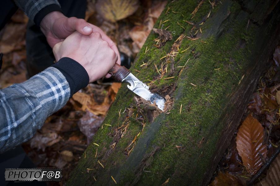 tyrolienne dans le bois