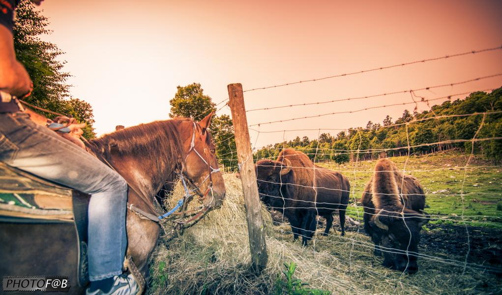 Équitation au coucher de soleil
