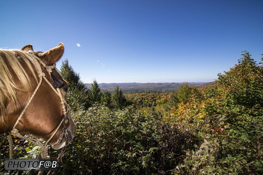 Faire du cheval dans les Laurentides